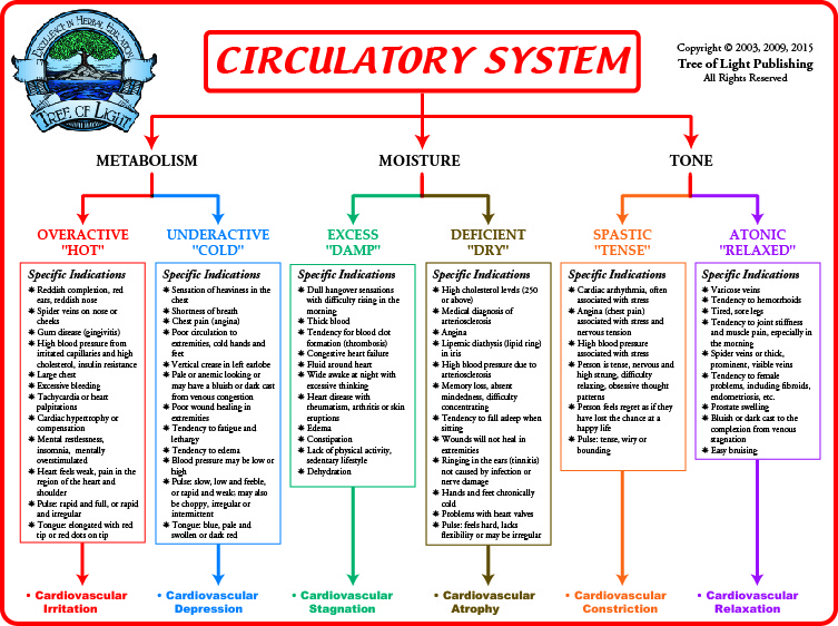 Biological Terrain Chart for the Circulatory System