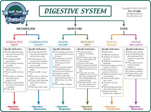 the digestive system product article