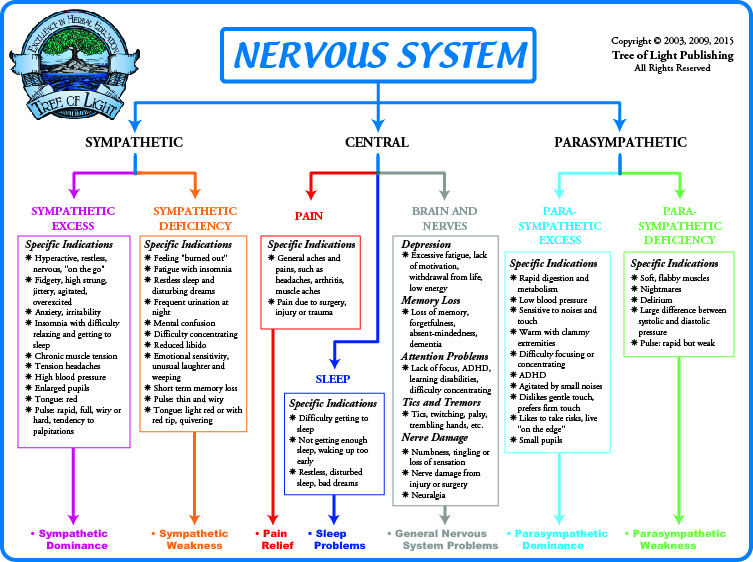 nervous chart: Biological terrain for the nervous system chart