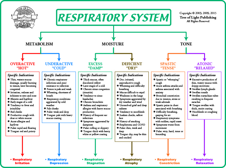 Biological Terrain Chart For The Respiratory System. Enterprise Performance Management Epm. Unlimited Website Hosting Consumer Mail Lists. Ing Term Life Insurance Quote. Online Classes For Teaching Degree. Shopping Cart Software Reviews Cnet. Blank Cd Label Template Miami Cleaning Service. Arizona Kitchen Remodel Team Health Flagstaff. Health Insurance Plans In Georgia